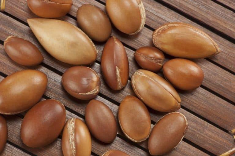Imagem de sementes de argan.